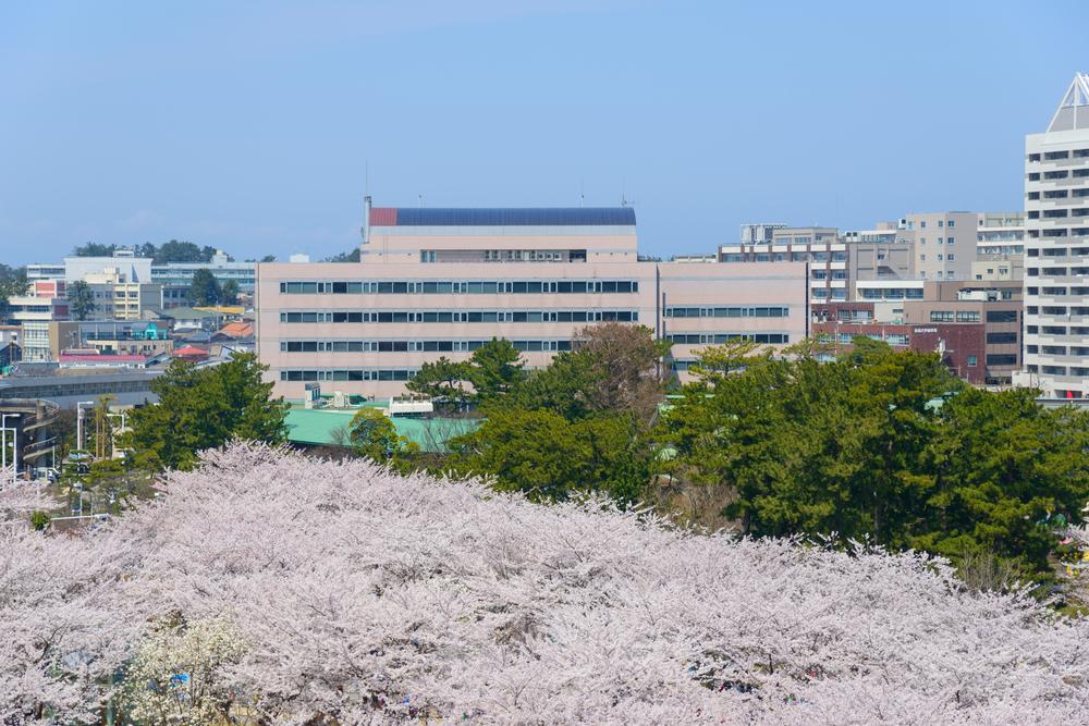 Cherry Blossom Over River